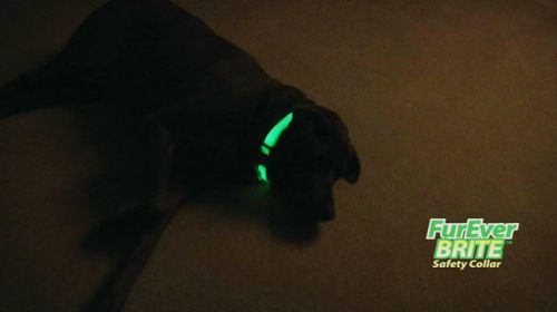 Fureverbrite Dog Laying On Floor.jpg